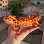 Бородатый дракон. Агама.