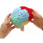 Мастер-класс человеческий мозг